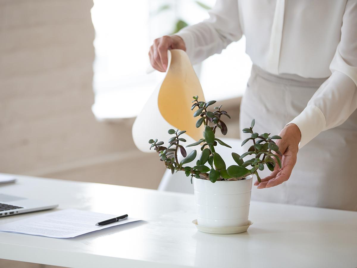 Come ridurre l'inquinamento domestico: le piante ci aiutano